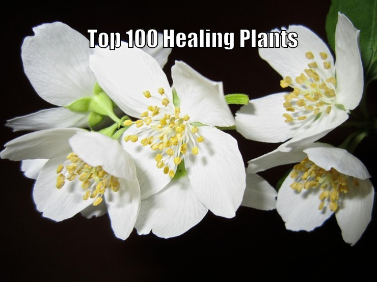Top 100 Best Healing Medicinal Herbs Spices And Plants Names Health Benefits And Medicinal Uses Familiar Territory
