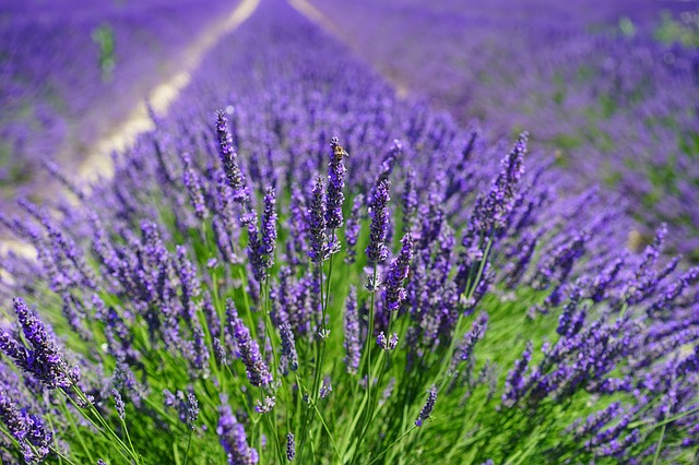 Seven Herbs that Attract Good Fortune and Prosperity