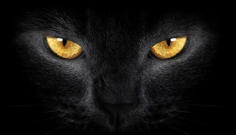 Animals and spirits: What are our pets seeing?