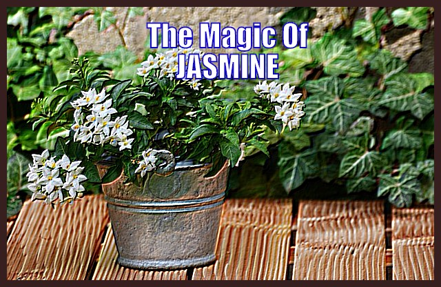 The Magic of Jasmine