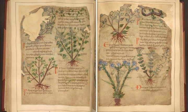 Ancient manuscript holds treasure of herbal knowledge