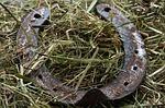 horseshoe photo
