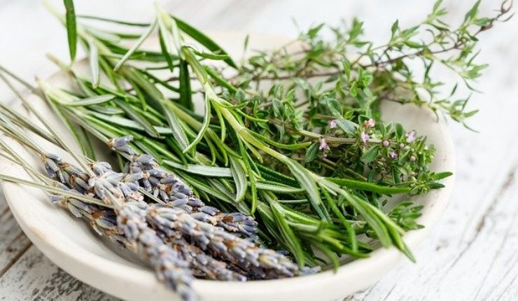 Health Benefits of Rosemary – Get the Good Stuff